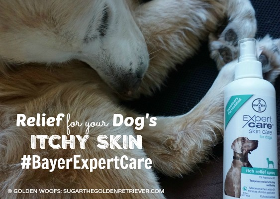 Relief For Your Dog's Itchy Skin #BayerExpertCare