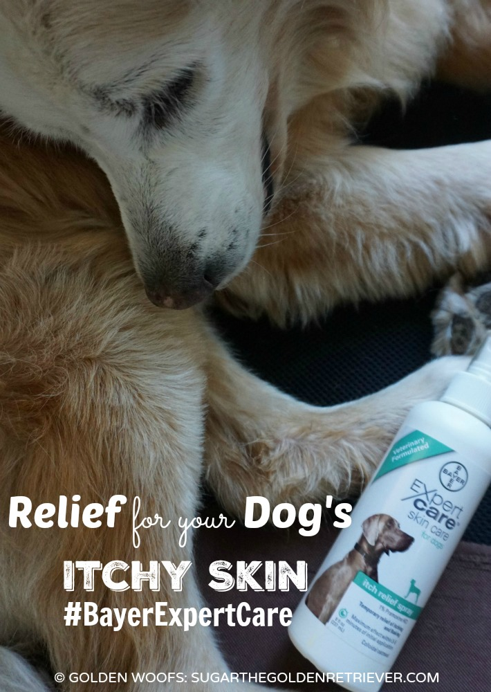 Relief for Your Dog's Itchy Skin
