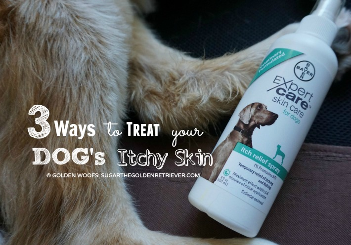 Ways to Treat Dog's Itchy Skin