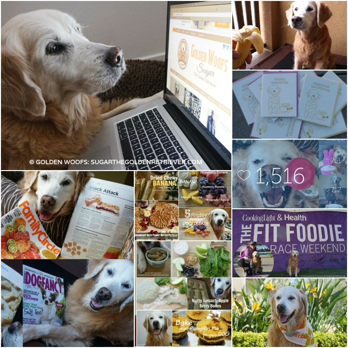 Best Blog: Golden Woofs 2015 & 2016 Plans