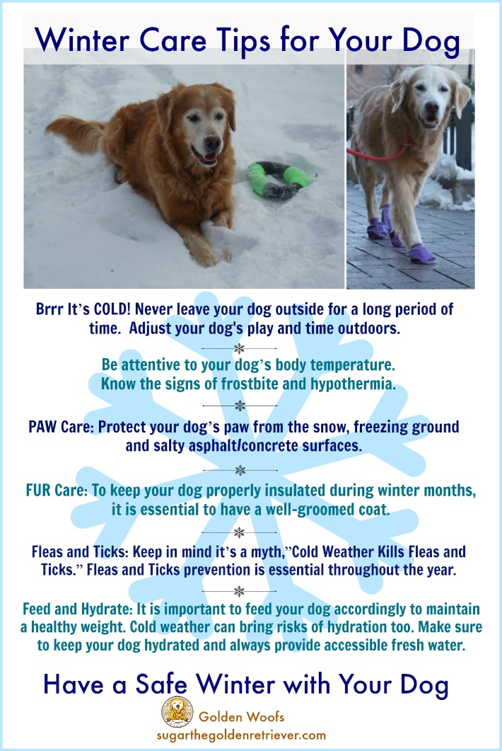 infographic winter care tips for your dog   sugar the golden