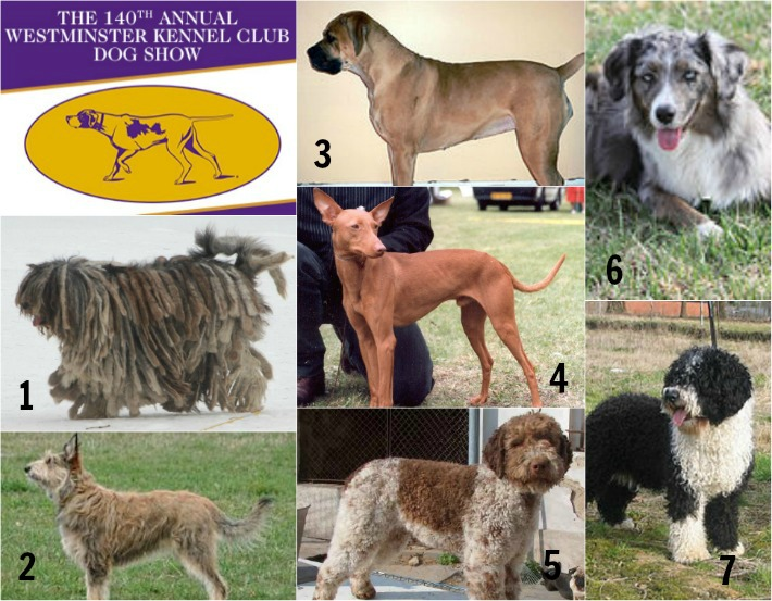 TICKETS for 140th Annual Westminster Kennel Club Dog Show