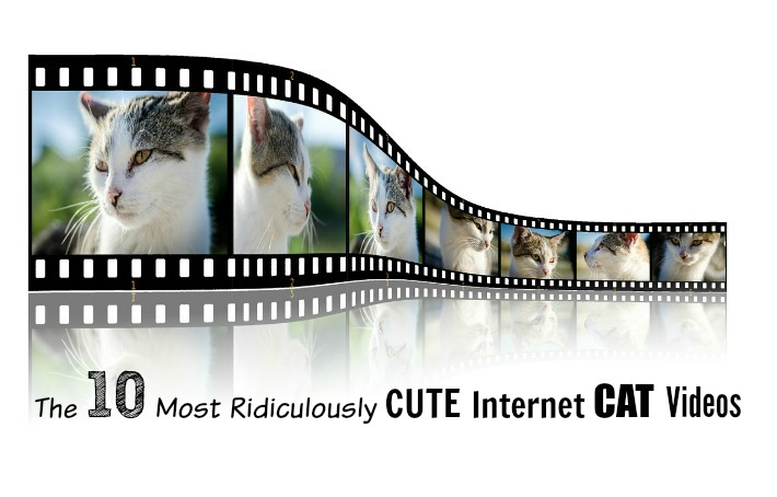 The 10 Most Ridiculously Cute Internet Cat Videos