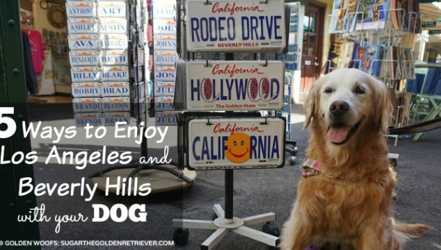 5 Ways to Enjoy Dog Friendly Los Angeles & Beverly Hills