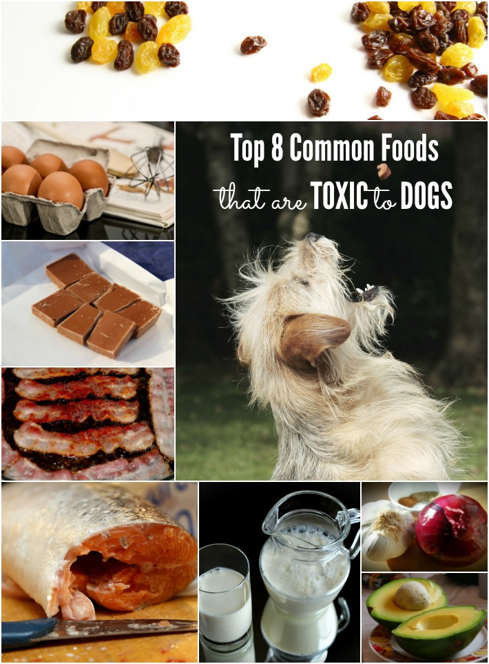 8 common foods toxic to dogs