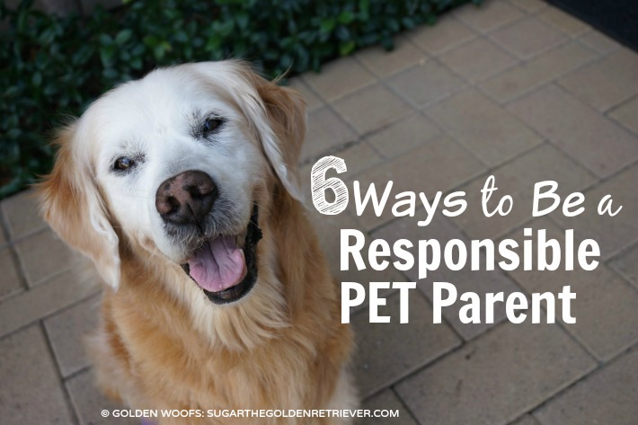 6 Ways to Be A Responsible Pet Parent #BeSleepypodSafe