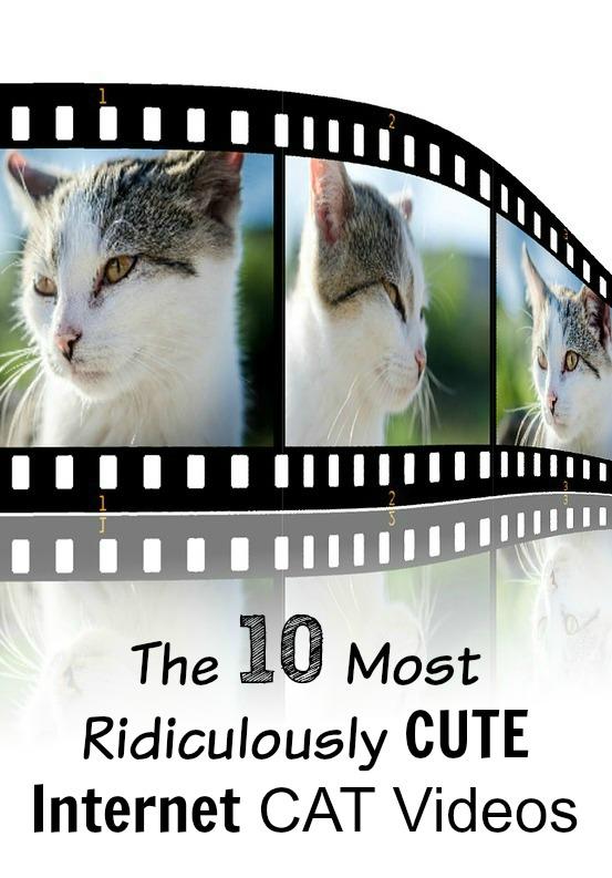 CUTE Internet CAT Video