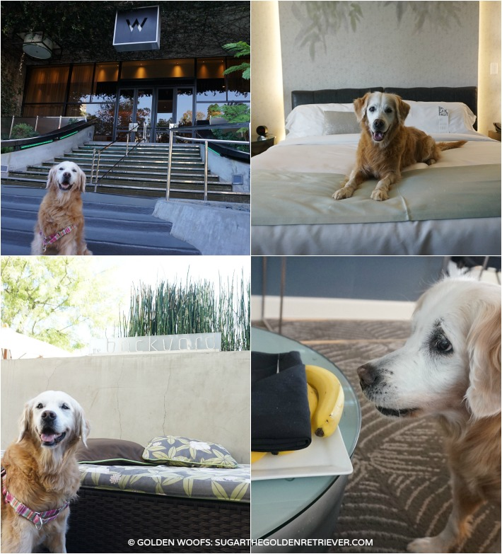 Dog friendly los angeles W hotel