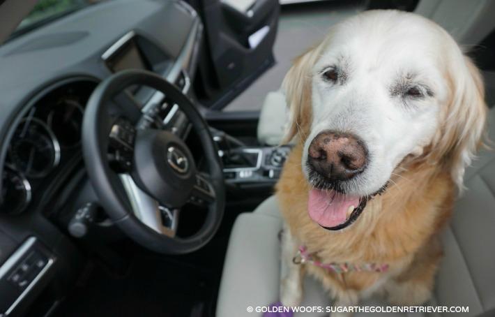 Driving Matters Mazda