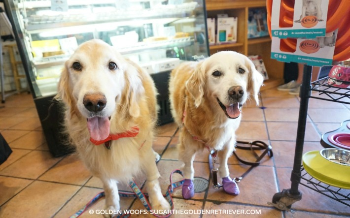 Golden Pal Meet up at The Dog Bakery