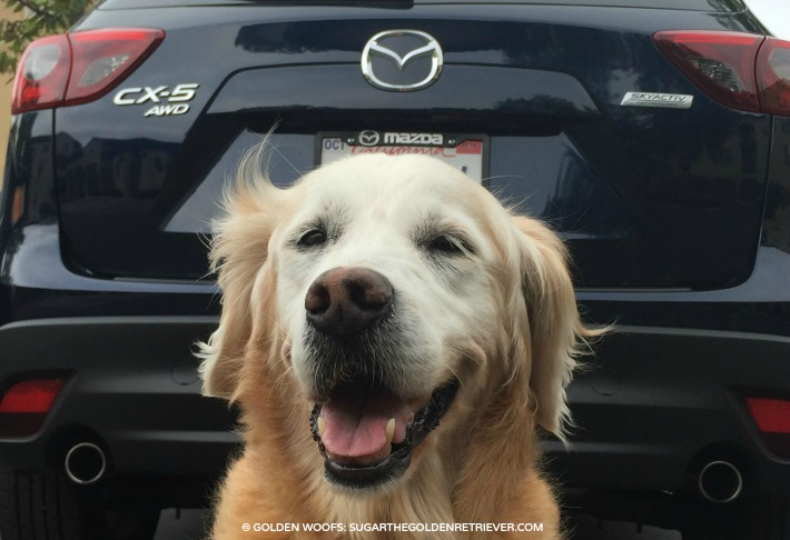 dog friendly Mazda CX5 Car Review