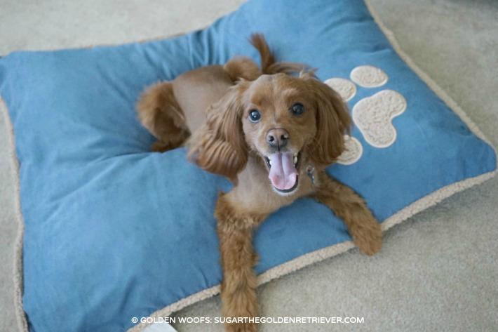 Petmate Aspen Pet Pillow Bed