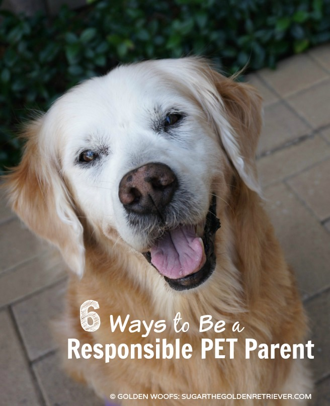 responsible parent Parent loans advertisement parents  the parents will be held responsible  the parent cannot owe an overpayment on a federal education grant or be in default.
