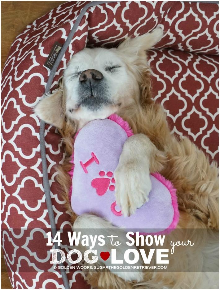 Ways to Show Dog Love