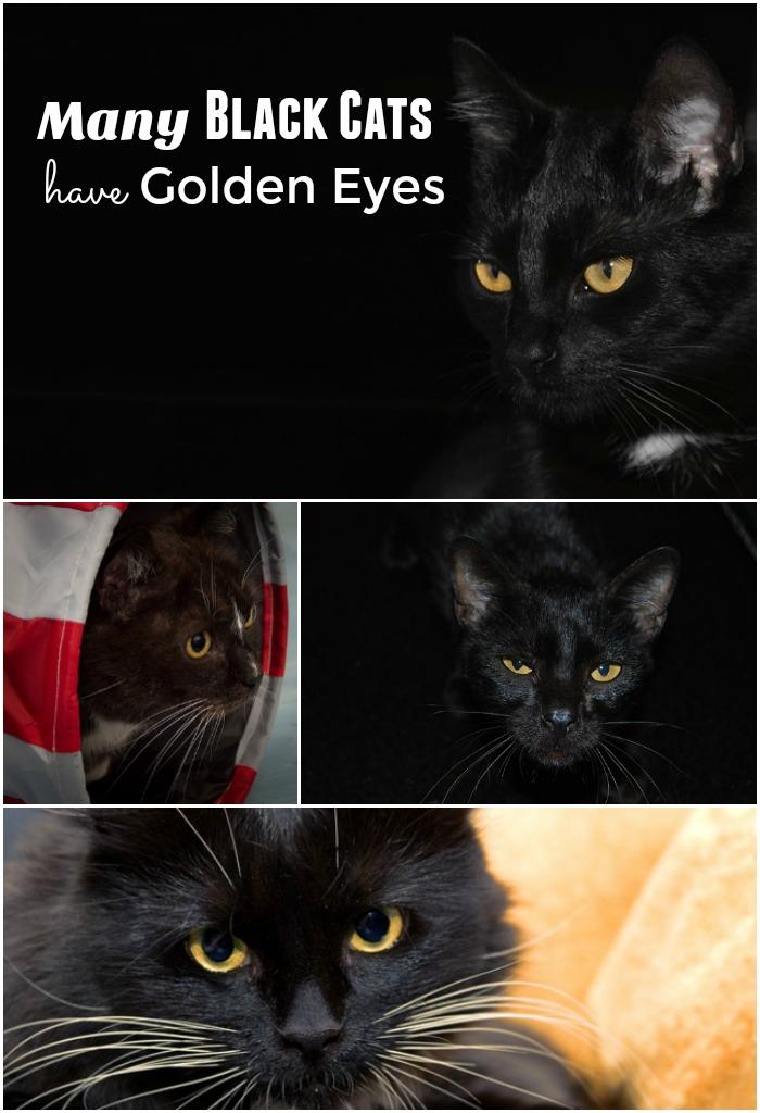 Black Cats Golden Eyes Golden Woofs