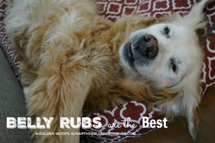 Dog Belly Rubs The BEST