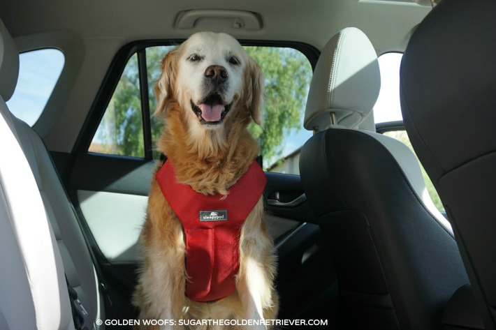 5 Things A Dog Owner Will Love About Mazda CX-5 # ...