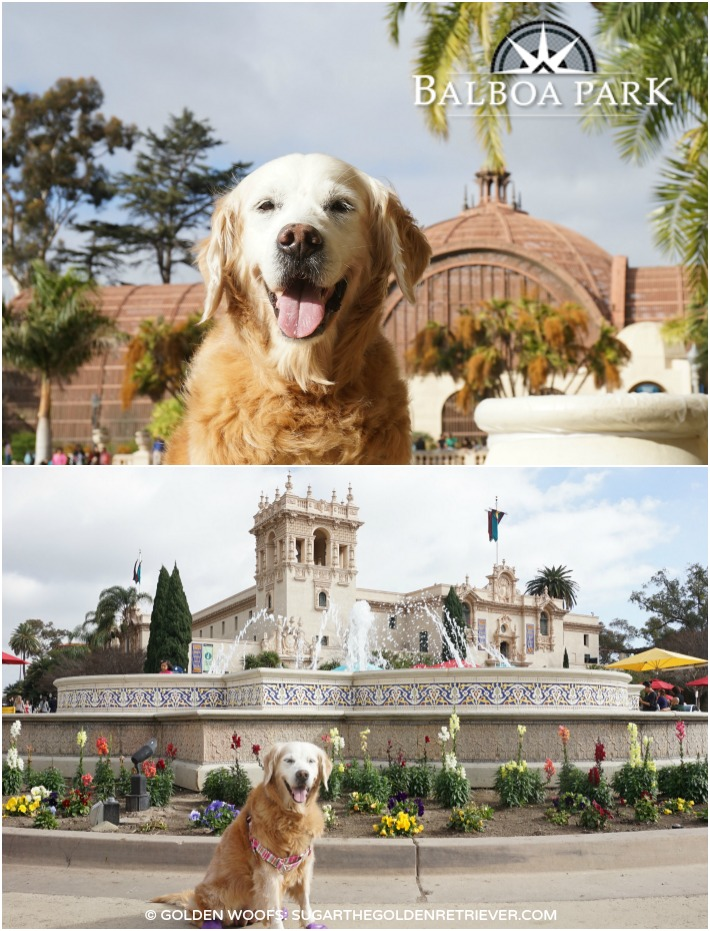 dog friendly balboa park