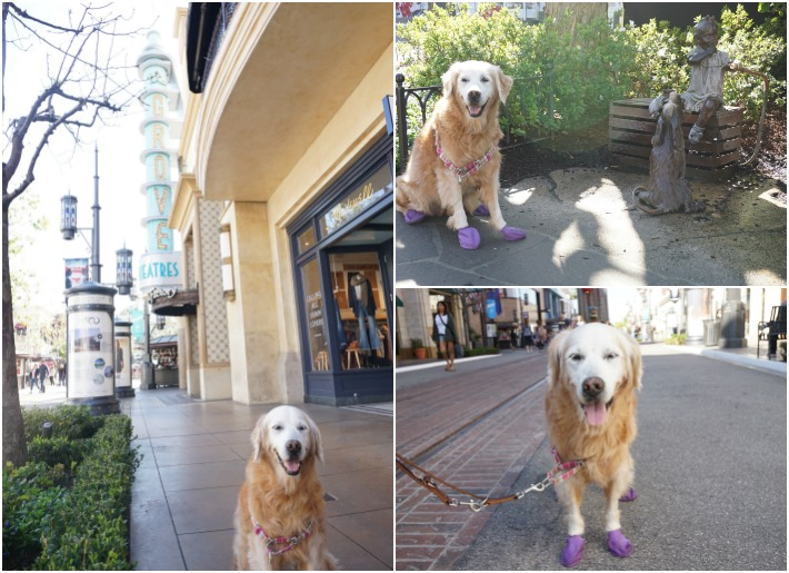 dog friendly los angeles the grove