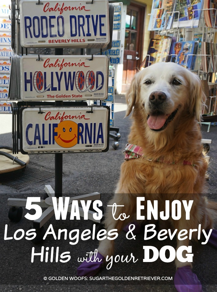5 Ways Enjoy Dog Friendly Los Angeles & Beverly Hills