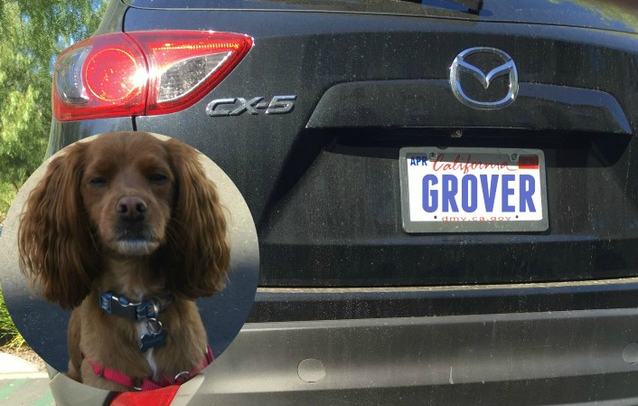 dog friendly mazda cx-5 testimonial