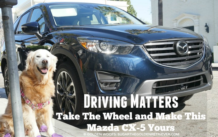 driving matters dog friendly mazda