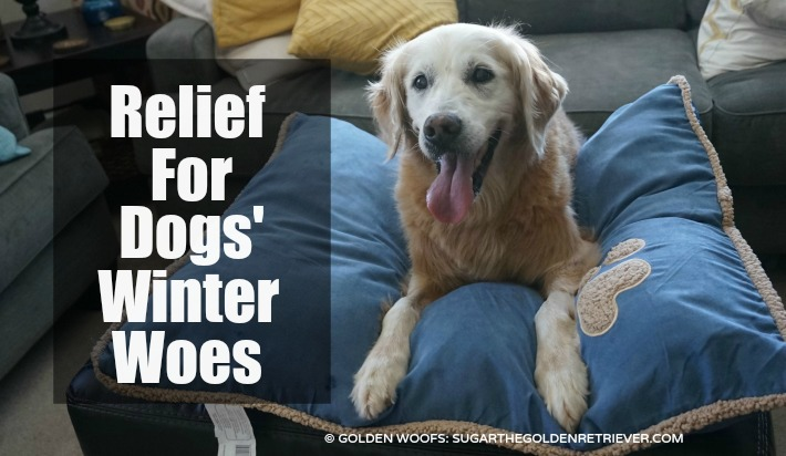 Relief For Dogs' Winter Woes