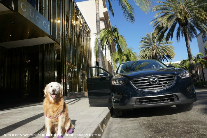 rodeo drive dog friendly mazda cx-5
