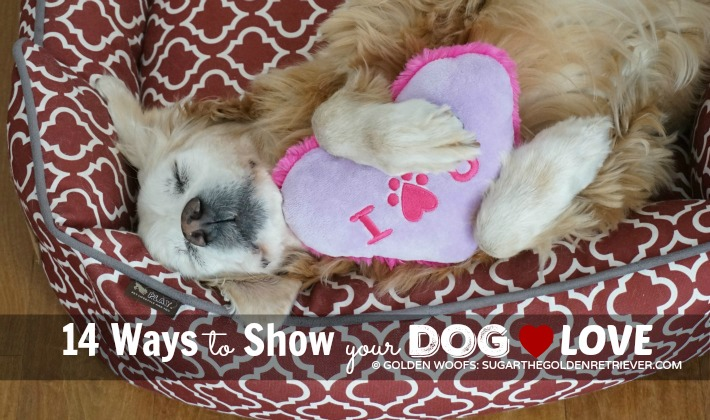 14 Ways to Show Your Dog Love