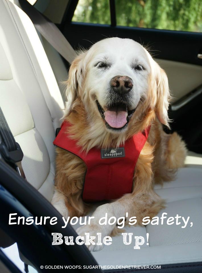 sleepypod dog harness Buckle Up
