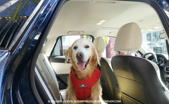 pet travel sleepypod dog harness