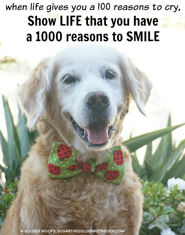 Show Life 1000 Reasons To Smile