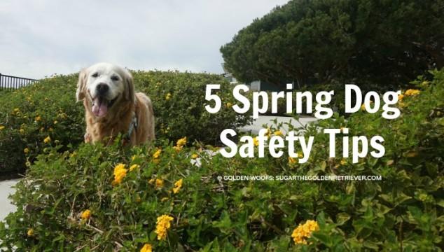 5 Spring Dog Safety Tips #BeSleepypodSafe