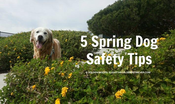 5 Spring Dog Safety Tips