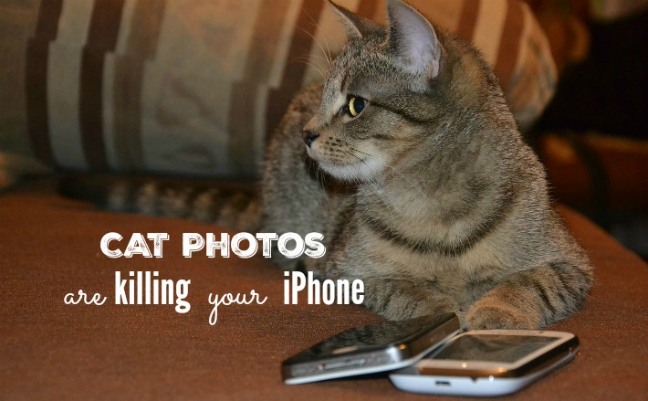 Cat Photos Are Killing Your iPhone