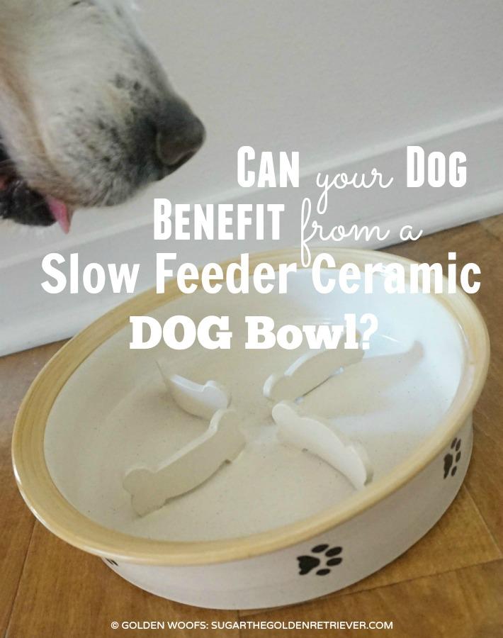 Ceramic Dog Bowl Slow Feeder 4PawsPottery
