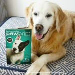 Golden Woofs featured in Paw Print Magazine