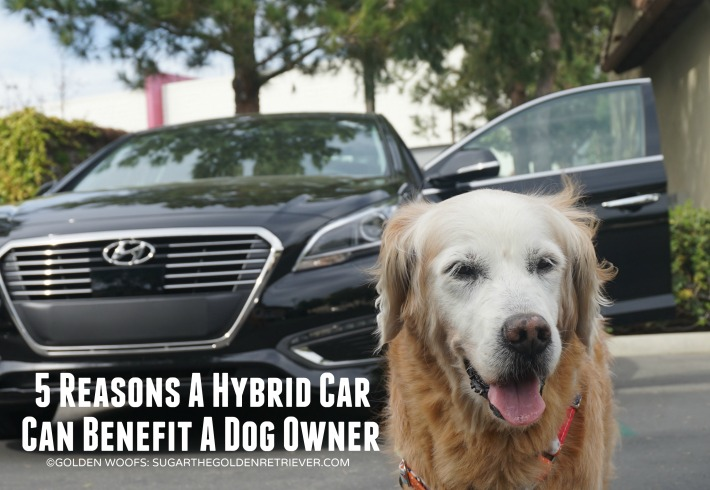 Hybrid Car benefits dog owner