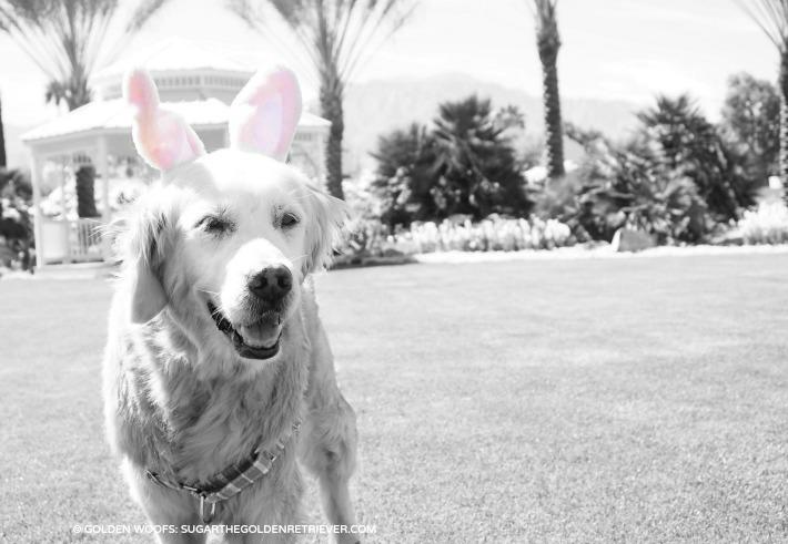 Easter Dog SUGAR