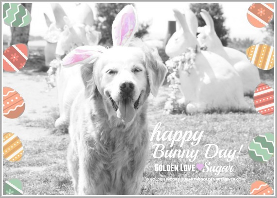 Happy Easter, Easter Dog SUGAR