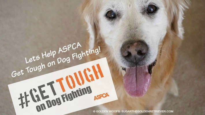 Help ASPCA Get Tough on Dog Fighting!