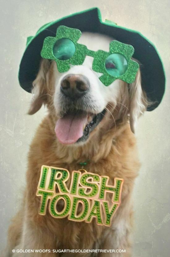 Irish Dog Today