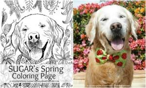 SUGAR Spring Coloring Page