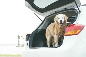 SUGAR's Pet Travel Car Review