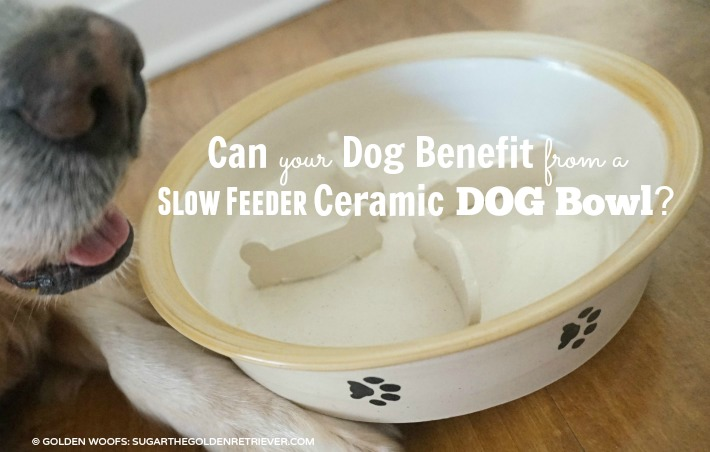 Can Your Dog Benefit From A Slow Feeder Ceramic Dog Bowl