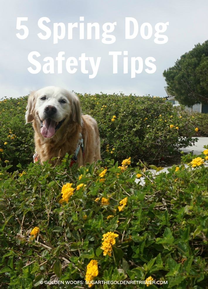 Spring Dog Safety Tips