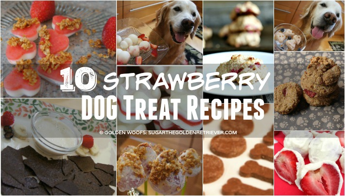 10 Strawberry Dog Treat Recipes