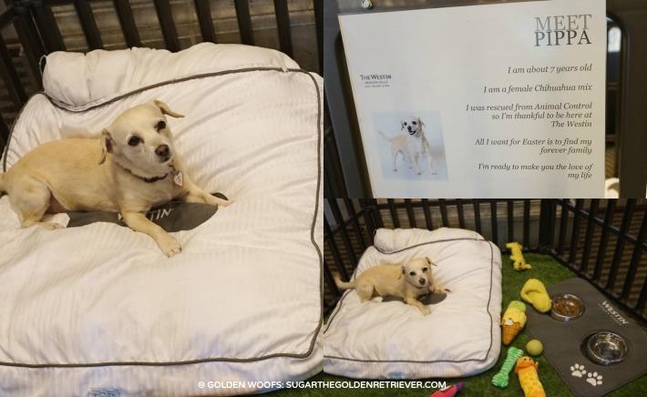 Westin Adopt A Pet