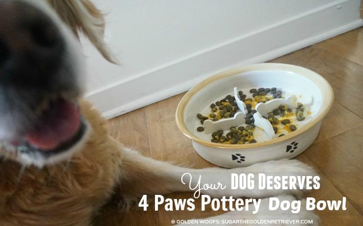 dog bowl 4 Paws Pottery