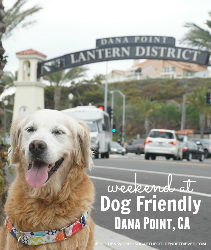 dog friendly dana point ca